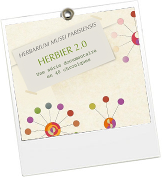 Herbier 2.0 - Museum d'histoire naturelle - JulieFromParis